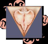 yoni triangle